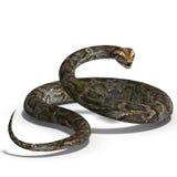 Koninklijke python Royalty-vrije Stock Afbeelding