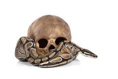 Koninklijke Python met schedel royalty-vrije stock afbeeldingen