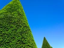 konischer Heckenbaum der Architektur mit schönem blauem Himmel Stockbilder