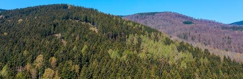 Koniskt berg i de Harz bergen som t?ckas med den blandade skogen royaltyfri fotografi