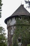 Koniskt slotttorn som är bevuxet med den gröna murgrönan royaltyfria foton