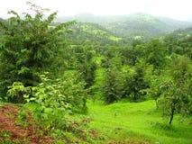 Konkan风景在春天 免版税库存照片