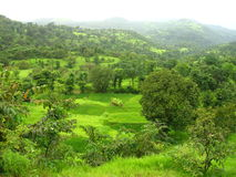 Konkan-Landschaft im Frühjahr Stockbild