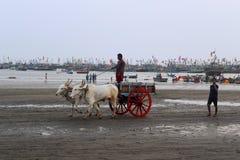 KONKAN, MAHARASHTRA, ÍNDIA, em fevereiro de 2018, homem local com o carro de boi para o passeio na praia de Harne fotos de stock