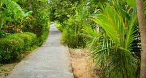 Konkret bana eller gångbana i djungelskog Arkivfoto