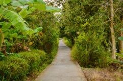 Konkret bana eller gångbana i djungelskog Royaltyfri Bild