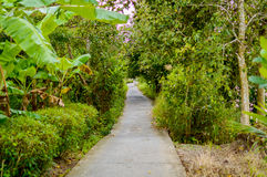 Konkret bana eller gångbana i djungelskog Arkivbilder