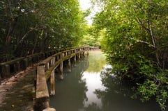 Konkret gångbana i mangroveskog på den Koh Chang ön arkivfoto