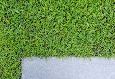 Konkret golv och gräs fotografering för bildbyråer