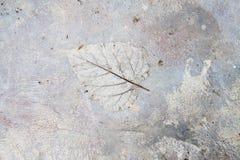 Konkret golvtextur arkivbild