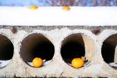 Konkret konstruktionsplatta med hål som är i förlade apelsiner fotografering för bildbyråer