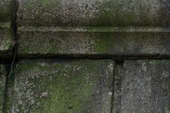 Konkret textur med mossa som orsakas av skada från havet royaltyfri fotografi