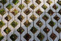 Konkreta fyrkantiga celler med uppehällegräs Royaltyfri Fotografi