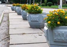 Konkreta sängar med gula blommor, ställning på konkreta tjock skiva royaltyfria foton