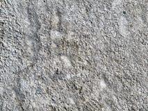 Konkrete Oberfläche des Schmutzes Stockbilder