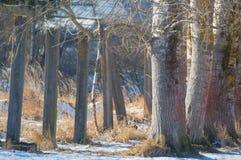 Konkrete Säulen, die in die Bäume mit dem Schnee im Winterausdruck sich bewegen Lizenzfreies Stockfoto