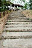 Konkrete Schritte im Garten Lizenzfreies Stockbild