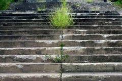 Konkrete Treppe, Stockfotos