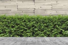 Konkreter Decking und Anlage mit dem Wandgarten dekorativ stockfotografie