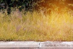 Konkreter Gehweg im Park mit Gras, Sonnenlicht Lizenzfreies Stockbild