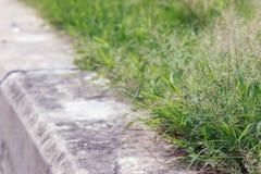 Konkreter Gehweg im Park mit kleinem grünem Gras Lizenzfreies Stockfoto