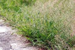 Konkreter Gehweg im Park mit kleinem grünem Gras Stockbild