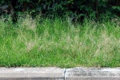 Konkreter Gehweg im Park mit kleinem grünem Gras Stockfotografie