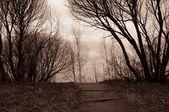 Konkreter Weg umgeben durch kahle Bäume Lizenzfreies Stockbild