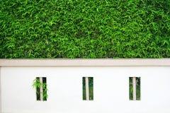 Konkreter Zaun und Baum Stockbild