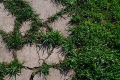 Konkretes überwältigt mit grünem Gras stockbilder