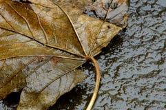 konkretny autum liścia obraz stock