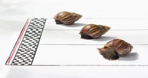 Konkurencyjny ślimaczka Ścigać się zdjęcie royalty free
