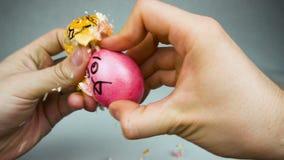 Konkurrens för modigt ägg för traditionell påsk dumpa eller jarping med dekorerade ägg under den kristna festivalen Pascha eller arkivfilmer