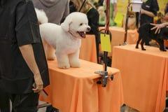 Konkurrens som ansar hundkapplöpning Arkivbilder