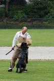 konkurrenshundpolis Royaltyfri Fotografi