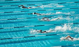 konkurrenskraftig simning Arkivbilder