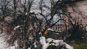 Konsekwencje śnieżna burza w wiośnie Łamani kwiatonośni drzewa, śnieżne gałąź, śnieg i kwiaty, opad śniegu, klimat zdjęcie wideo