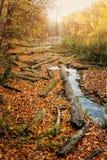 Konsekwencje wylesienie wokoło rzeki w jesieni barwią Zdjęcie Royalty Free