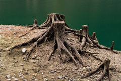 Konsekwencje wylesienie wokoło rzeki Obraz Royalty Free