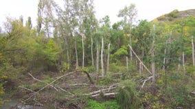 Konsequenzen eines starken Winds im Wald stock footage