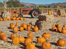 Konservera Maze och traktoren på en pumpalapp Royaltyfria Bilder