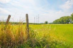 Konservera på horisonten av ett fält i solljus arkivbild