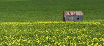 Konservieren Sie Bretterbude auf den Gebieten des Grüns und des Goldes stockfoto