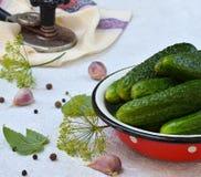 Konserwacja peklowanie ogórek Przygotowanie konserwacja od organicznie warzyw na lekkim tle Domowej roboty organicznie cru Obraz Royalty Free