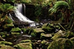 konserwacja spadek parkowy Russel Zdjęcie Royalty Free