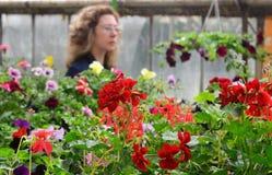 Konserwatorium kwiaty Obraz Royalty Free