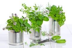 konserwować przetwarzających świeżych ziele Fotografia Royalty Free