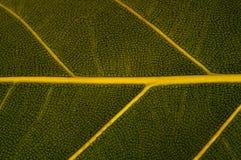 Konst av grön Leavetextur Royaltyfri Fotografi