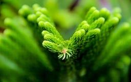 Konst av naturen Royaltyfria Foton