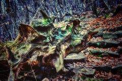 Konst av naturen Arkivfoton